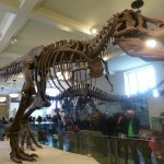 American-Museum- of-Natural-History-new-york-city